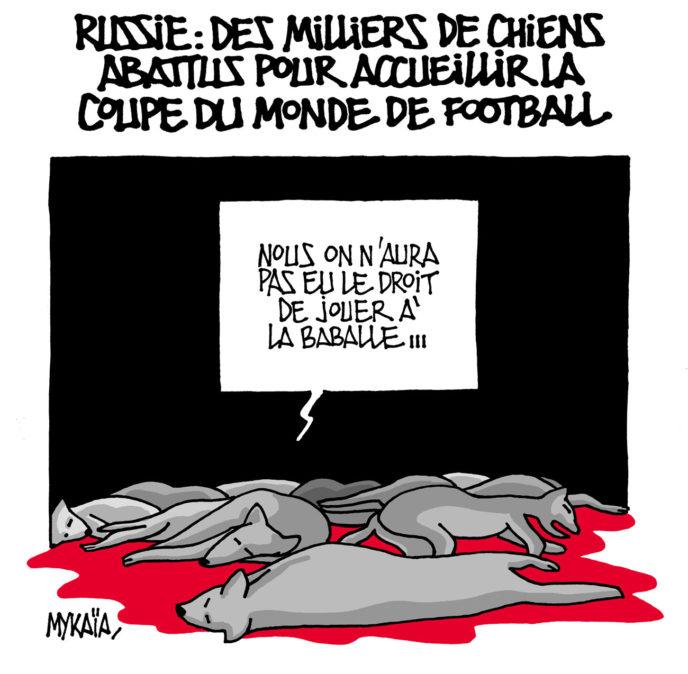 Russie : des milliers de chiens abattus pour accueillir la coupe du monde de football